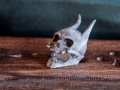 Miniature monster skull. Miniature devil skull